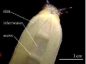 Anatomy « The Snail Wrangler
